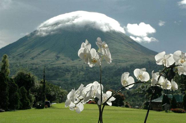 Anggrek bulan in front of Gunung Lokon.
